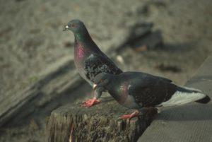Pest Bird Control