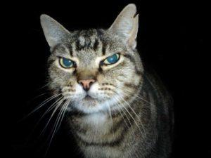 Feral Cat Control