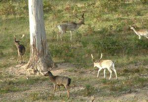 Wild Deer Control